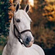 Anita Janssen, Oogvoorhetpaard, Oog voor het paard, connectie,krijgt mijn paard genoeg water