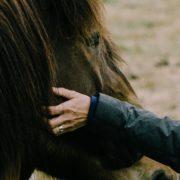 Anita Janssen, Oog voor het paard, connectie, Haflinger, persoonlijke ervaring met eigen paard
