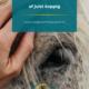 sensibel paard, connectie, oog voor het paard