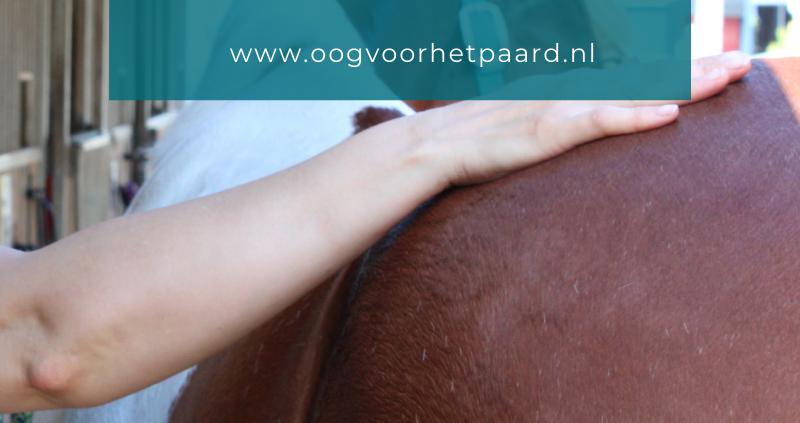 ondersteuning bij trainen paard
